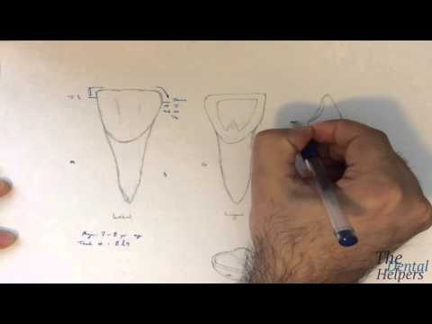 Dental Anatomy: Maxillary Central Incisor