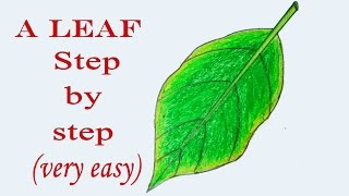 How to draw a leaf step by step (very easy)