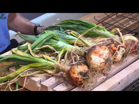How to Grow Rooted Vegetables | Urban Farming