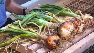 Urban Farming - How to Grow Rooted Vegetables - Roots to Table