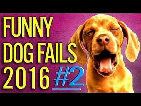 [Funny Fail Compilation 2017] Humorous Canine Fails 2016 PART #2 Canine / Pets Fails Compilation