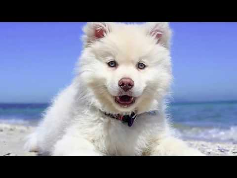 Top 10  Cutest Dog Breeds - 2019