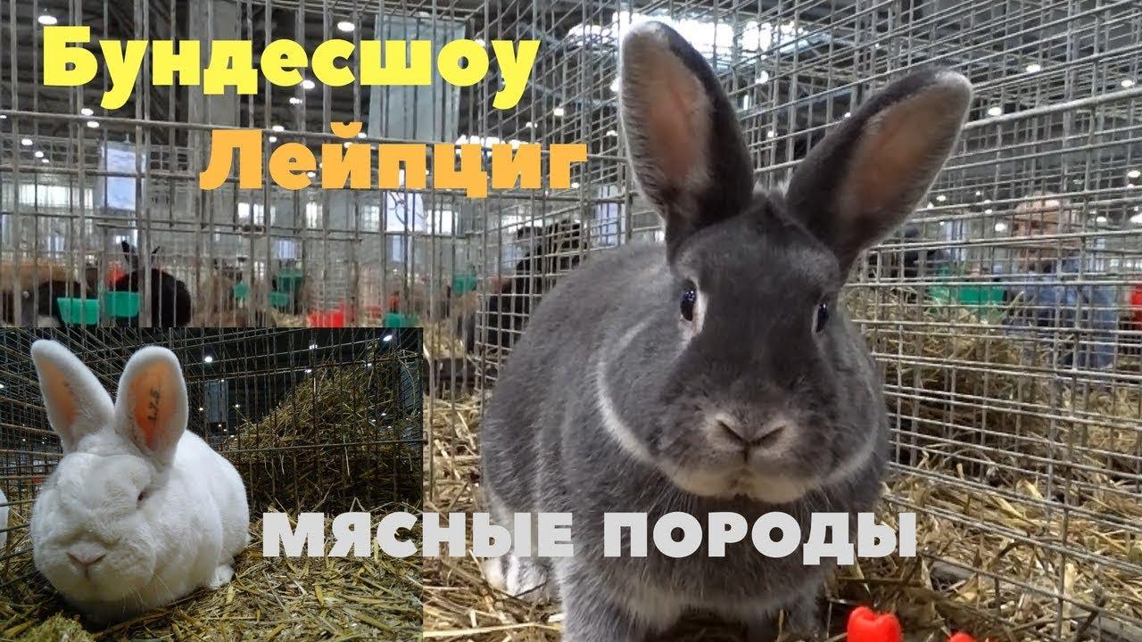 Племенные кролики нашего хозяйства 2016 год - YouTube