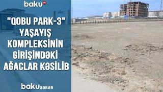 """""""Qobu Park-3"""" yaşayış kompleksinin girişindəki ağaclar kəsilib"""