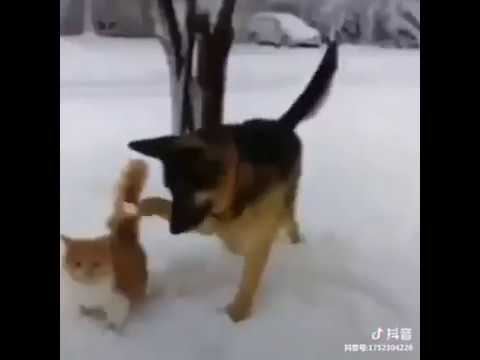 Dog Series: When a dog is fooling a cat