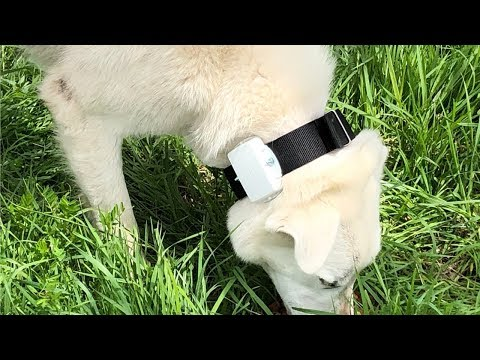 Tracking Collar for the Dog (LGD)
