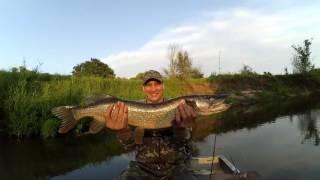 Рыбалка на малых реках Черноземья. спиннинг. Щука.