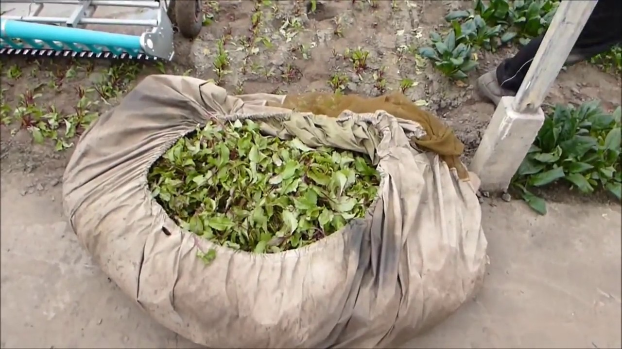 купить семена овощей агромаркет - YouTube