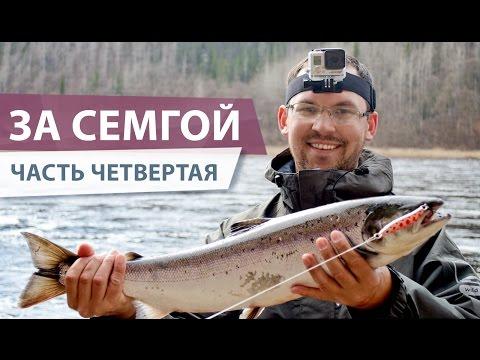 на кольском полуострове ловля семги видео