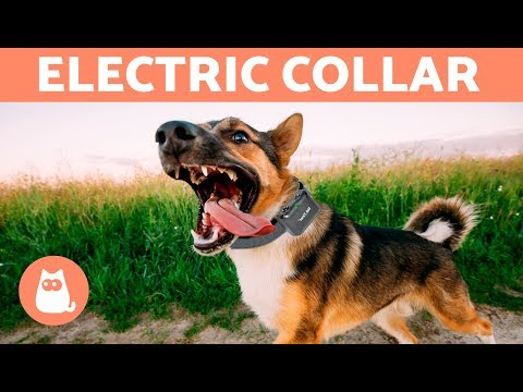 Pet Corner - Electric Collar for Dogs - Why Not Use Them?