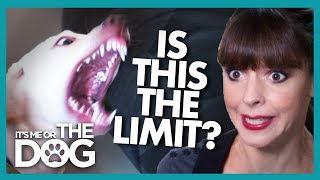Is This a Dog That Can't be Trained? | It's Me or the Dog