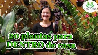 20 Plantas Para Você Ter Dentro De Casa