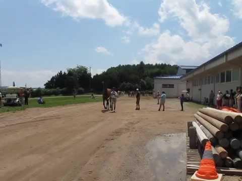 Pony Club Dressage Horse Jog - Virginia Horse Center 7/25/2009