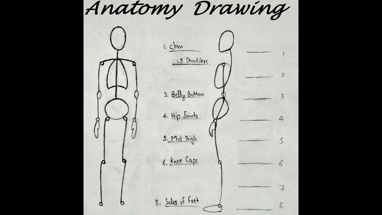 How to Draw Anatomy for Beginners, drawing Body Proportions - YouTube
