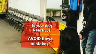 REACTIVE Dogs  Three BIGGEST mistakes owners make