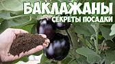 Инкрустированные семена ➡ Что это такое и как их сажать .