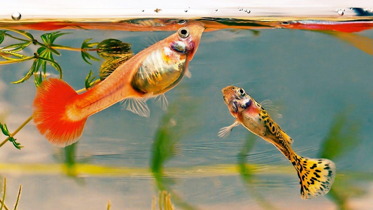 Aquarium fish tank automatic fish feeder - Pros Cons Of An Automatic Fish Feeder Aquarium Care