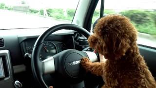 私、車の運転大好き!