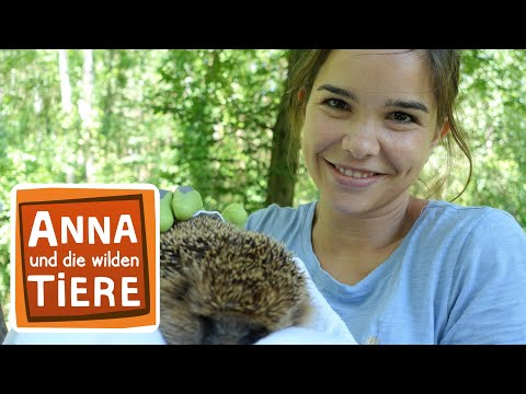 Wer Lebt Im Garten Doku Reportage Fur Kinder Anna Und Die Wilden Tiere Youtube