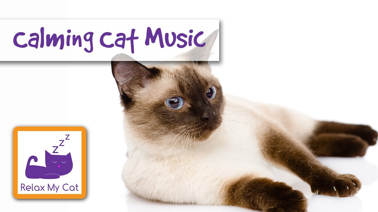 Music That Will Make Your Cat Calm