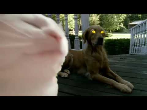 cat vibing to Goosebumps - Halloween