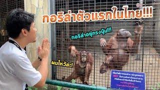 ไปสบตา-กอริล่า-ตัวแรกในไทย-กับสวนสัตว์ลอยฟ้าแห่งแรกที่จะถูกลืม