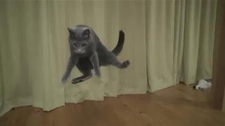 Прыжки котов в замедленном действии