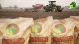 Rosomak - kukurydza (spot TV) | odmiana z HR Smolice
