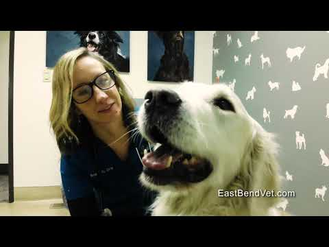 East Bend Animal Hospital-Dog Perspective Acupuncture 2019 1
