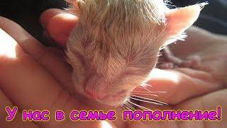 У нас родила кошка Морковка! (04.19г.) Семья Бровченко.