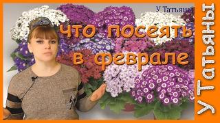 Какие цветы сеять в феврале. Как вырастить рассаду однолетних цветов. Что посеять в феврале.