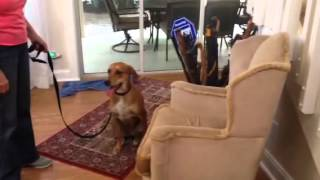 Tampa Dog Training In Home Dog Training