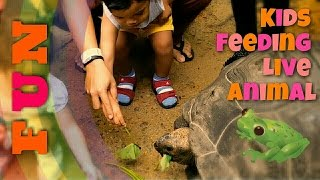 Kids Fun FEEDING EXOTIC ANIMAL at the Farm in the City