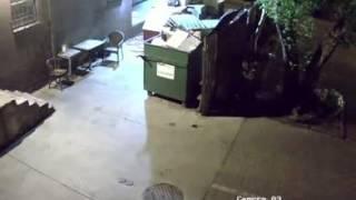 Медведь украл мусорный бак   смотреть видео онлайн