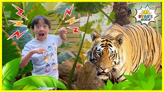 Ryan Tours the World and into the wild to hunt for Treasure!