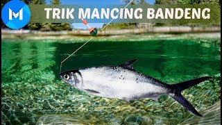 Tips Dan Trik Mancing Ikan Bandeng Terbaik Youtube