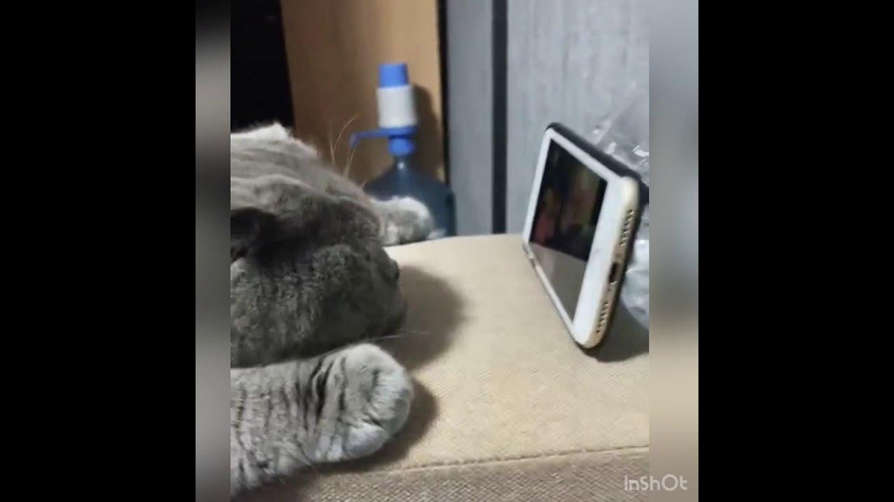 Просто Посмотри До Конца Очень смешное видео