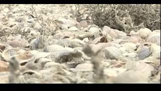 Секреты Аральского моря(Видео сюжеты о аномальной погоде в последние время.Аральское море и как оно высохло.Секреты аномальных..., 2015-03-21T05:28:23.000Z)
