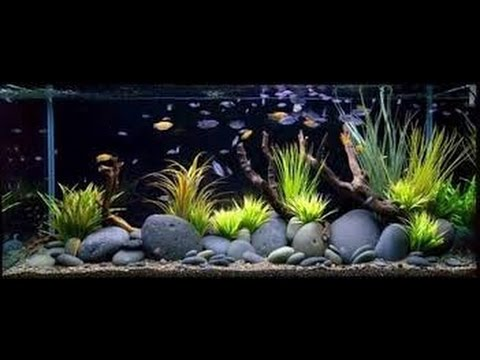 How To Decorate Fish Tank You