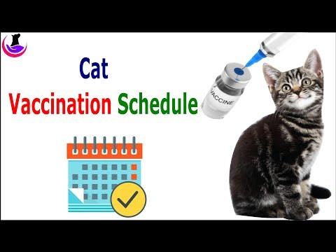 Cat Vaccination Schedule (in Hindi)