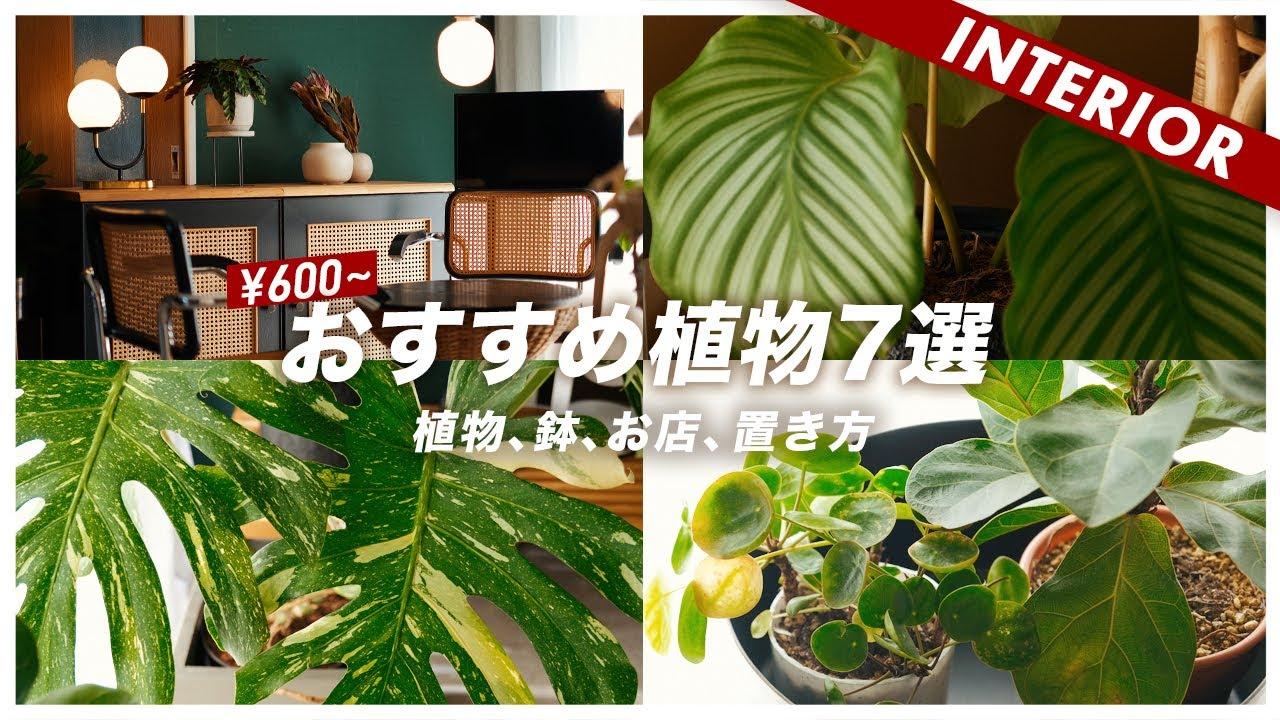 インテリアに合わせやすい植物おすすめ7選!鉢とお気に入りのショップもご紹介