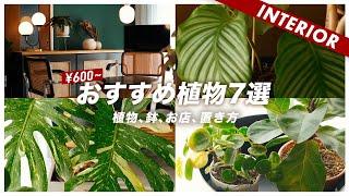【オシャレになる】インテリアに合わせやすい植物おすすめ7選!鉢とお気に入りのショップもご紹介