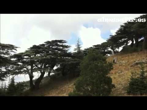 Viajar a Líbano y Valle de la Bekaa | almusafir.es