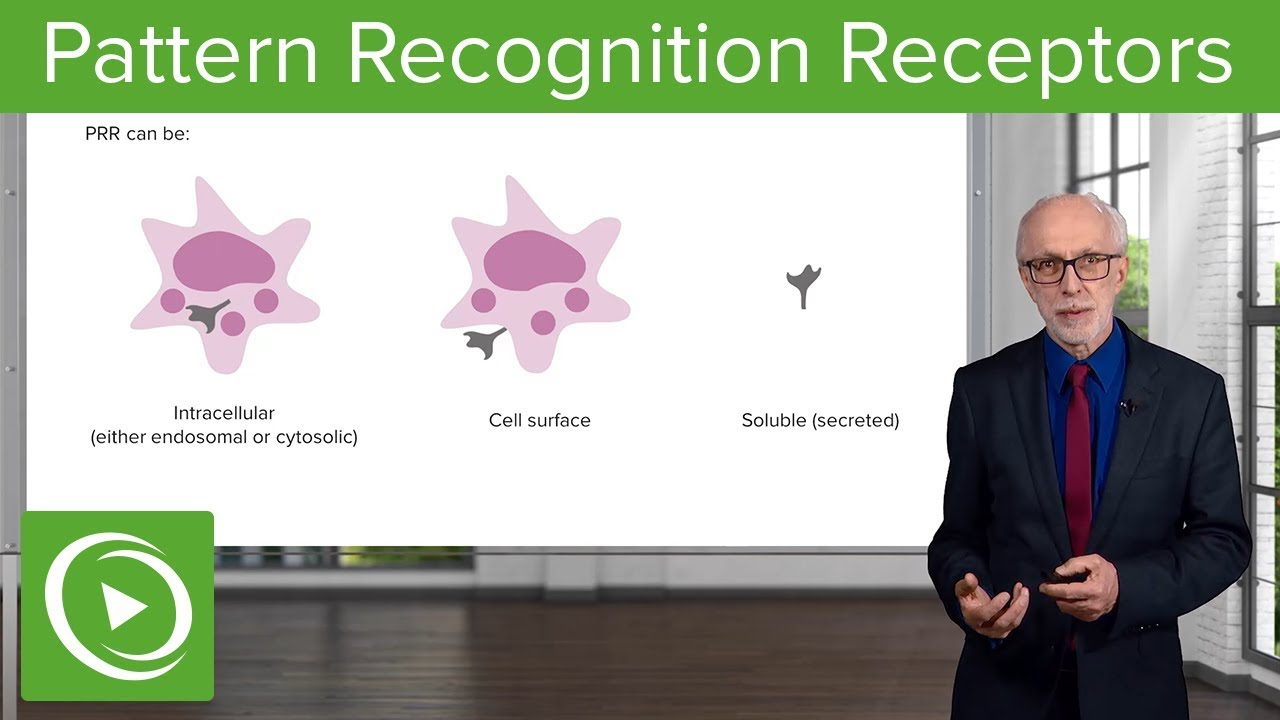 Pattern Recognition Receptors (PRRs) – Immunology | Lecturio