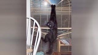 BLACK CATS are so HARDCORE - It