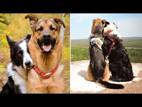 The Friendship Between These Two Dogs Has Just Broken The Internet!