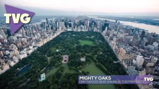 Mighty Oaks - Driftwood Seat (markus Toepfer Edit)