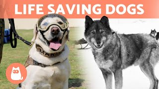 5 DOGS That SAVED People's LIVES 🐶🎖️ See These Canine Heroes!