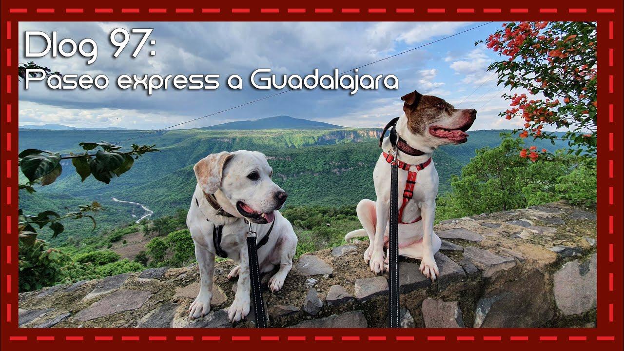 Dlog 97: Viaje express a Guadalajara con mis perros!