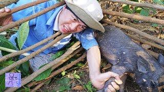 Xây Nhà Bẫy Heo Rừng & Cái Kết Đắng Lòng . Amazing Quick Wild Pig Trap